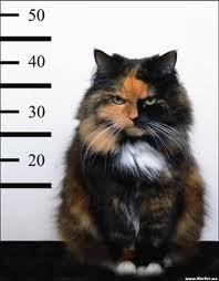 kitty mugshot