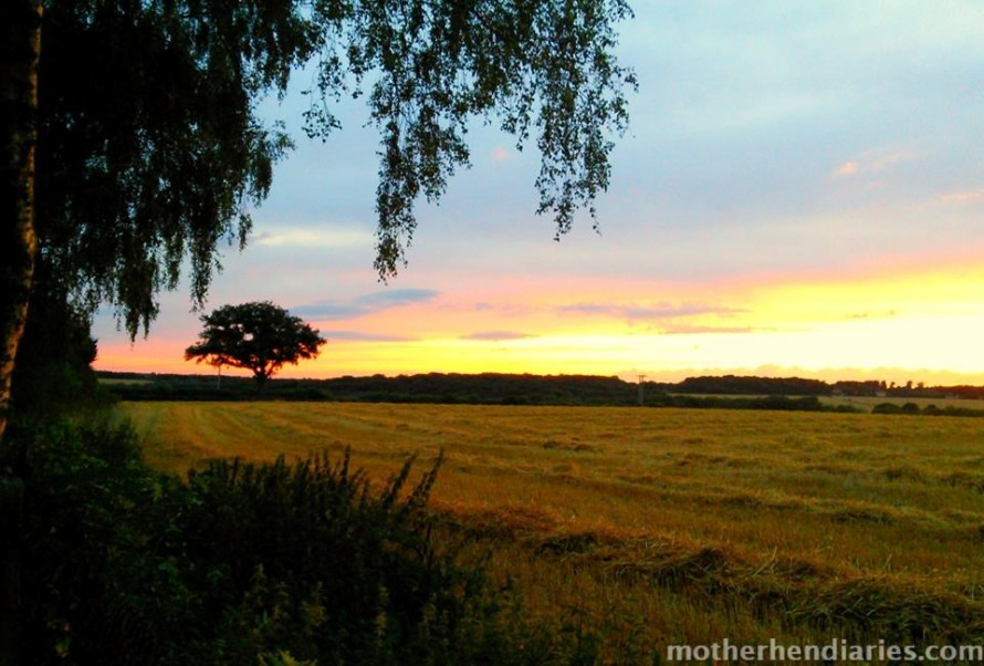sunset over mown wheat