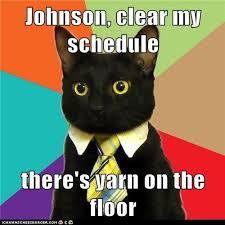 cat meme dailykos.com