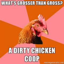 chicken-coop-meme